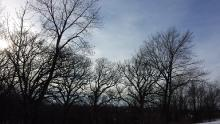 The sillhouette of barren trees against a late afternoon Winter sky.